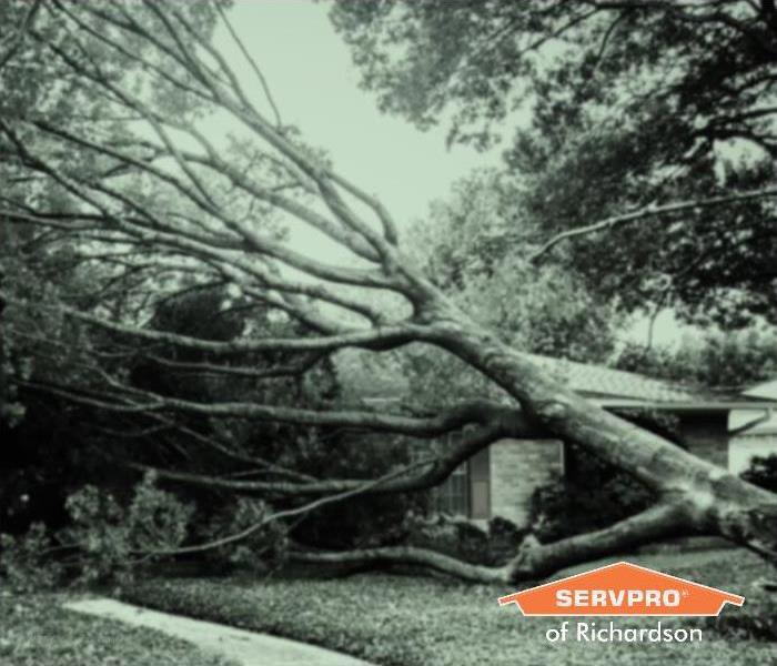 fallen tree damaging house