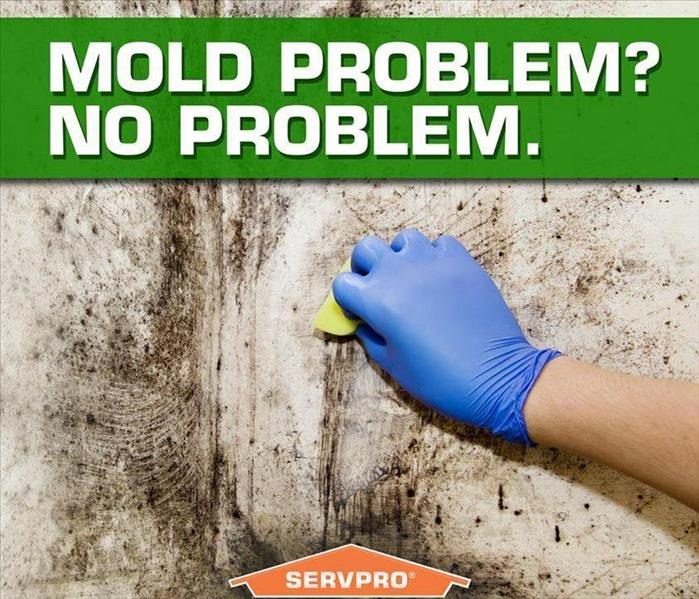 Mold Removal from Wall