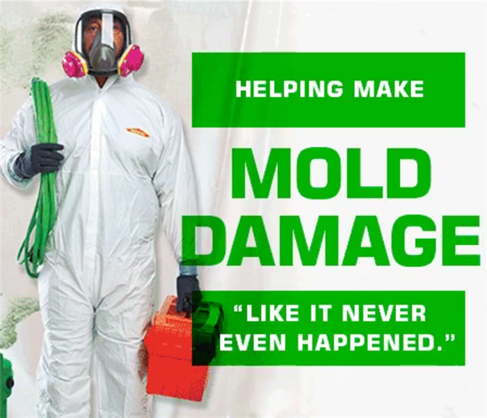 Commercial Mold Cleanup Worker in Protective Gear