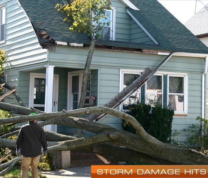 Examining Tree That Fell From Storm Damage