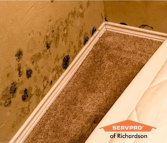 mold in basement richardson